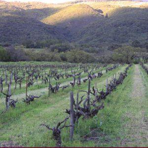 Old Hill vineyard