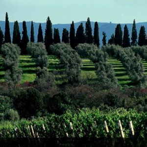 Orma vineyards