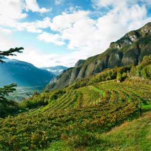 Vineyards in Trento DOC