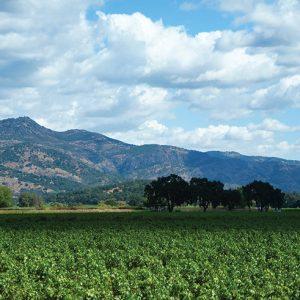 Franciscan vineyard