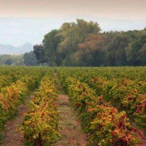 Lyeth vineyards