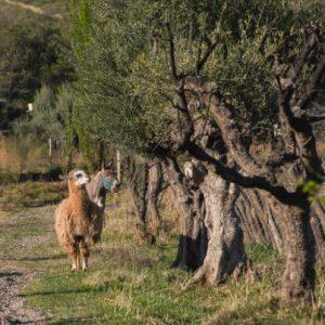 Bodegas Krontiras vineyard