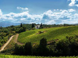 Ruffino vineyard