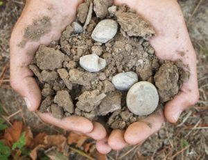 Kim Crawford soil
