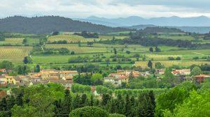 Surrounding vineyards at Carcassonne