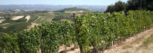 Valdinera vineyards