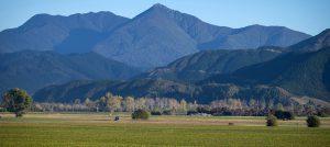 Matua Valley vineyard