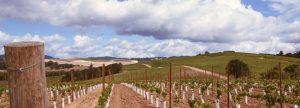 Pike Road vineyard