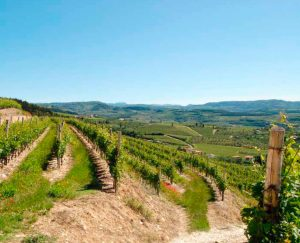 Tommasi Valpolicella vineyard