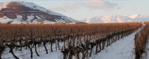 Yarden vineyard winter