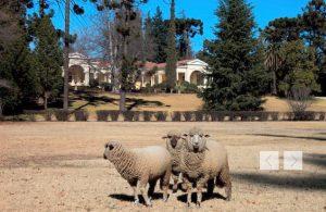 Concha y Toro vineyard and grounds
