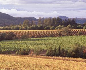 Frei Brothers vineyard 2