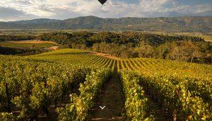 Merryvale vineyard
