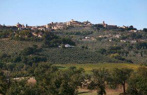 Umbria and Tabarrini vineyards