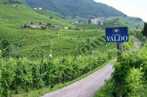 Valdo vineyard