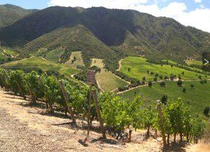 Viña Montes vineyard 1
