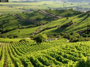 Viña Montes vineyard 2