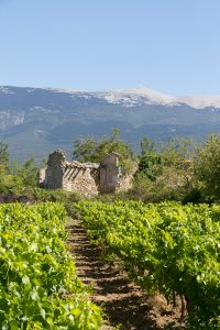 Vineyards and Mont Ventoux