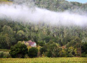 Volker Eisele vineyard and winery