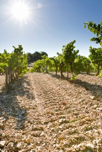 the limestone and clay soils of Château Pesquié Ventoux vineyard