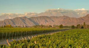 Kaiken vineyard 1