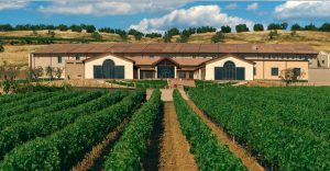 falesco-winery-2