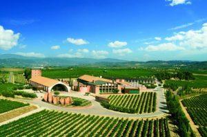 juve-y-camps-winery-views-1