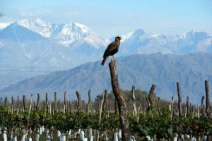 peregrines-at-las-perdices-winery