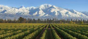 trapiche-vineyards-in-mendoza