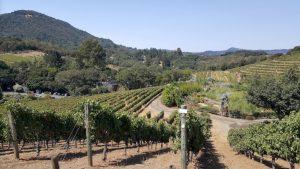 benziger-vineyards-near-glen-ellen