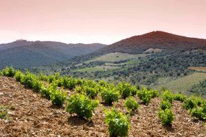 bodegas-paniza-carinena-vineyard