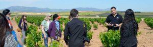 carinena-vineyard-and-visitors