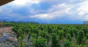 kaiken-vineyard-b2