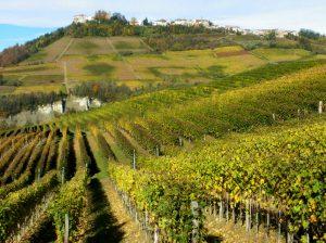 piazzo-vineyard