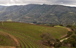 talbott-vineyard-in-carmel-valley