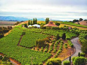 viansa-venue-and-vineyards