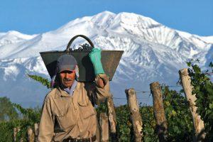 worker-in-gascon-vineyard