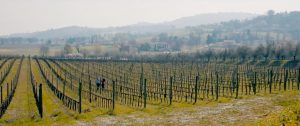 arnaldo-caprai-vineyard-in-winter
