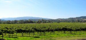 chateau-st-jean-vineyard
