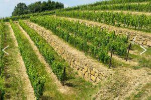 lamole-di-lamole-terraced-vineyards