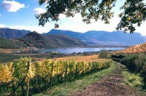 peter-zemmer-vineyard-and-alto-adige-river