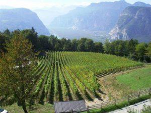 peter-zemmer-winery
