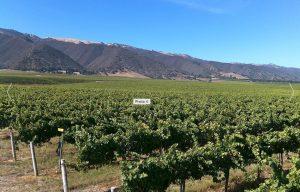 talbott-vineyard