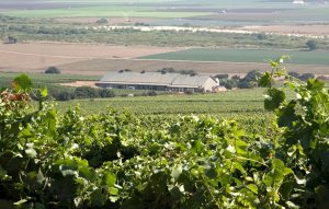talbott-winery