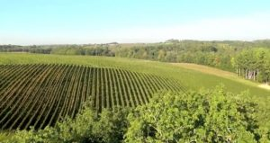 tariquet-vineyard