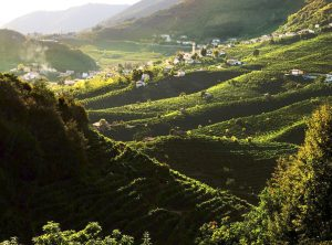 cartizze-hill-vineyards-and-town