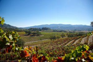 chateau-montelena-vineyards
