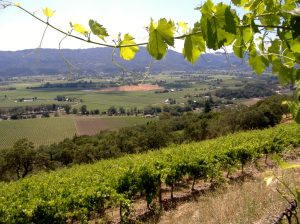 frank-family-vineyards-vineyard