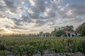 nieto-senetiner-vineyard-tasting-area