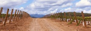 pike-road-vineyard-2